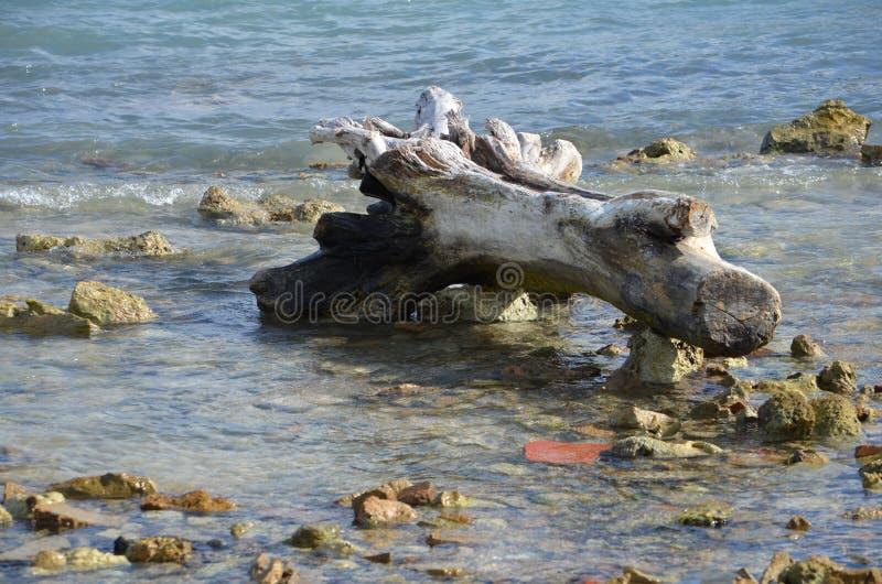 Madera de deriva en San Pedro imagenes de archivo