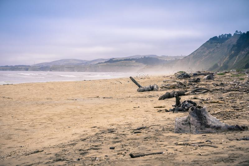 Madera de deriva en una playa arenosa fotografía de archivo libre de regalías