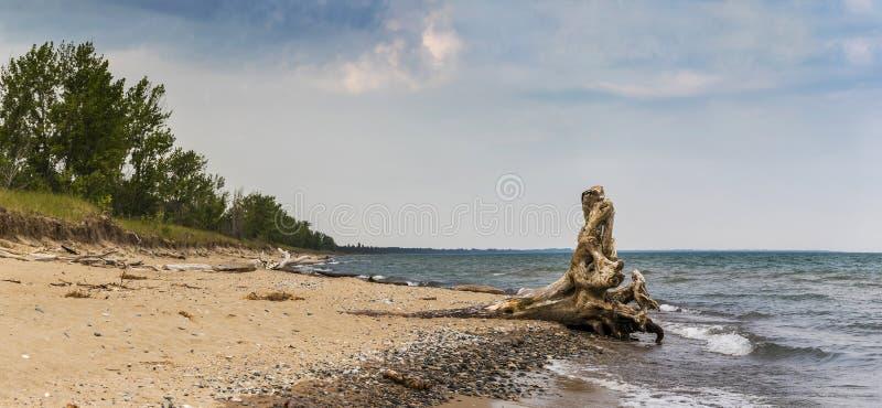 Madera de deriva en una playa del lago Hurón foto de archivo