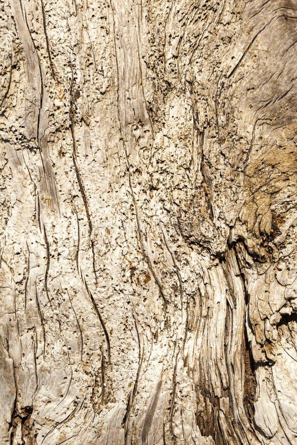 Madera de deriva - fondo de un cierre detallado para arriba de un burl envejecido del árbol con una textura definida imagenes de archivo