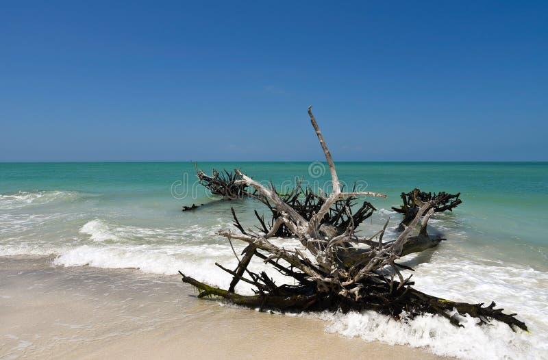 Madera de deriva resistida hermosa foto de archivo libre de regalías
