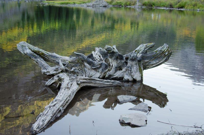 Madera de la deriva en las montañas fotografía de archivo