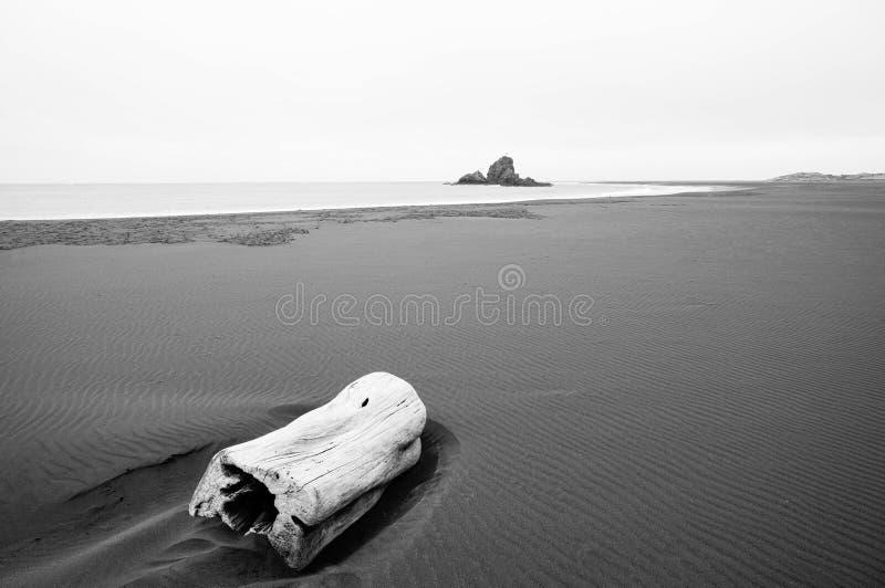 Madera de la deriva en la playa/el Piha, Nueva Zelanda imagen de archivo libre de regalías