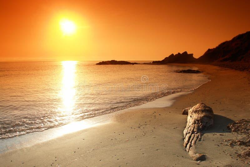Madera de la desviación en la playa foto de archivo libre de regalías