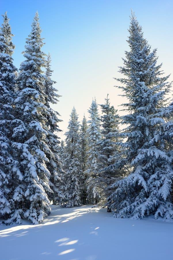Madera de la nieve fotos de archivo