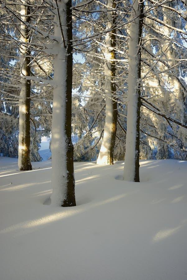 Madera de la nieve imágenes de archivo libres de regalías