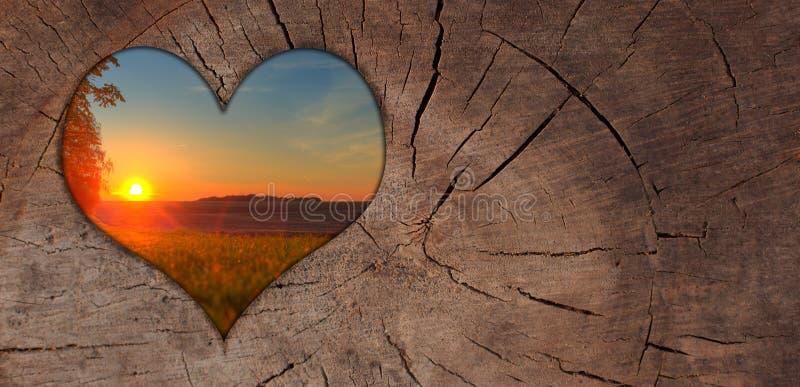 Madera de la puesta del sol del corazón del fondo imagen de archivo libre de regalías