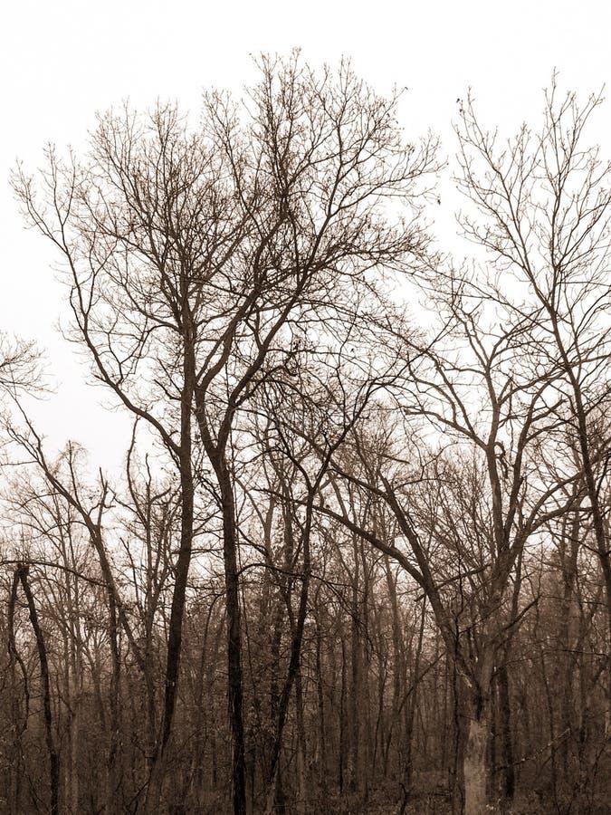 Madera de Missouri fotografía de archivo libre de regalías