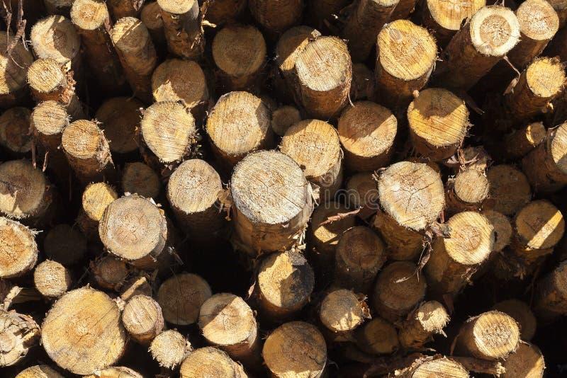 madera de pino joven imagen de archivo libre de regalías