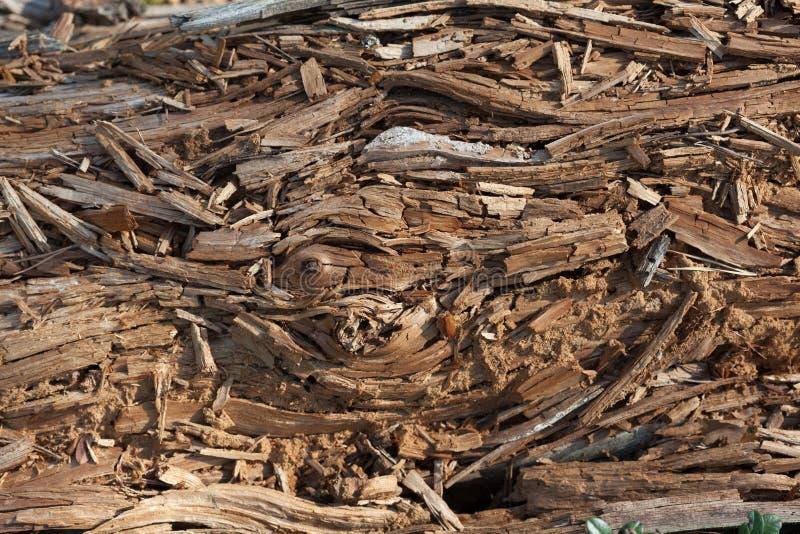 Madera de pino putrefacta fotografía de archivo libre de regalías