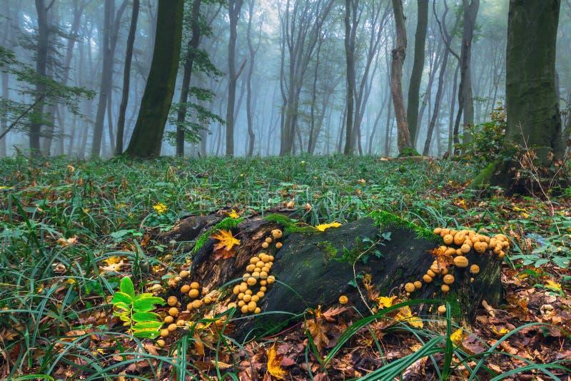 Madera del otoño imagen de archivo