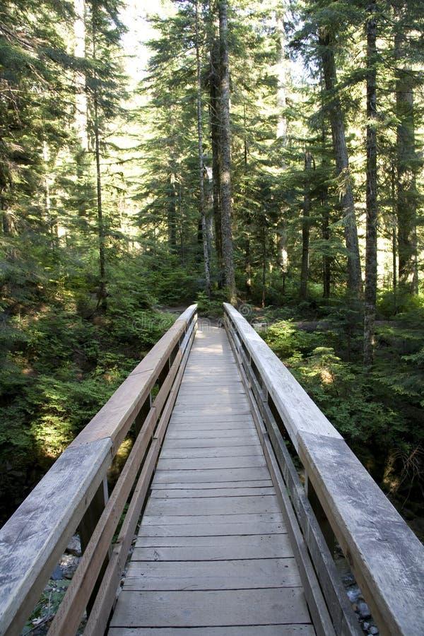 Madera del puente de rastro de la trayectoria de bosque imagen de archivo libre de regalías