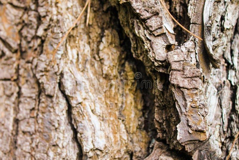 Madera del tronco texturizada foto de archivo libre de regalías