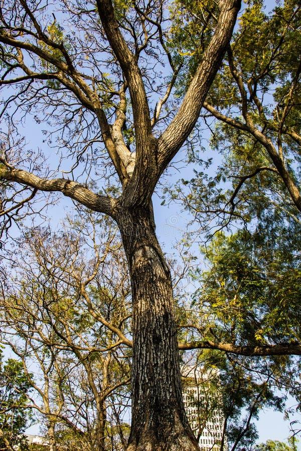 Madera del verde de la naturaleza de los árboles imágenes de archivo libres de regalías