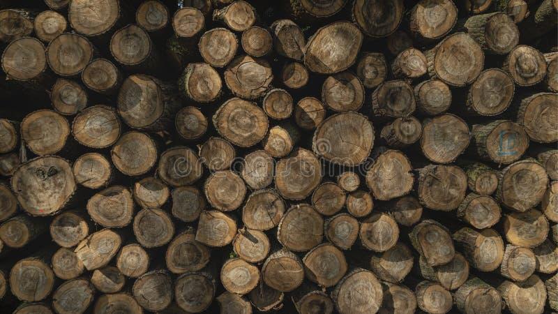 Madera derribada apilada para arriba Explotación de silvicultura del árbol fotos de archivo libres de regalías