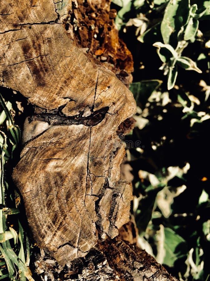 Madera e hierba imagen de archivo libre de regalías