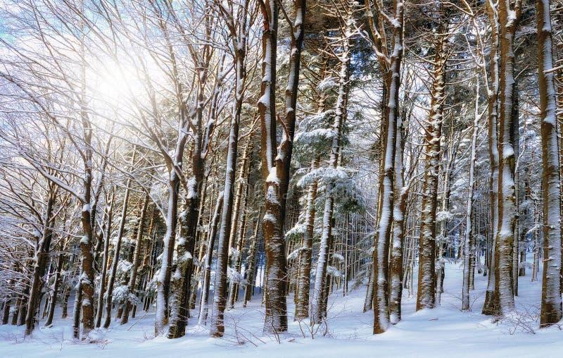 Madera en invierno imagen de archivo libre de regalías