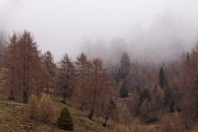 Madera en la niebla, Italia imagenes de archivo