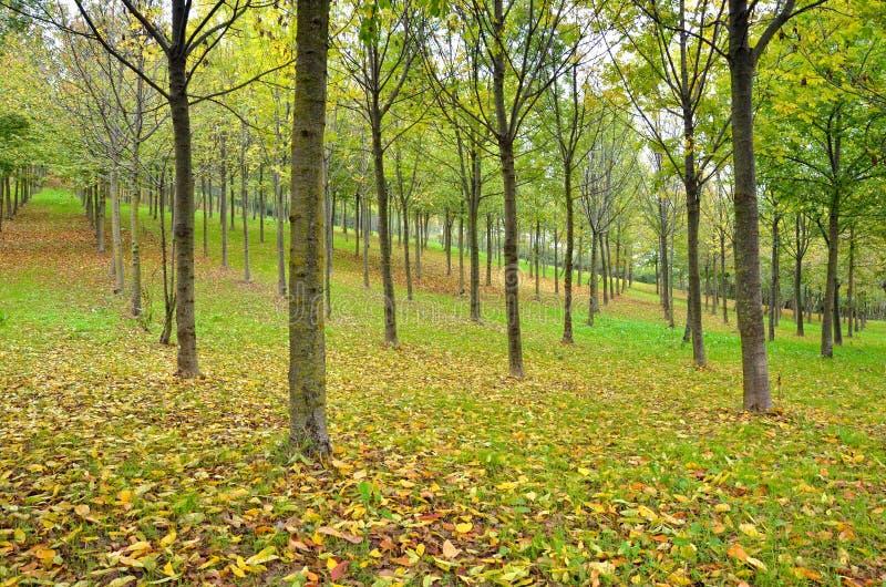 Madera en otoño foto de archivo