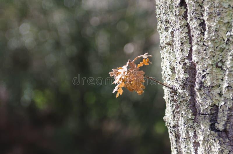 Madera en oto?o despu?s de la lluvia fotografía de archivo libre de regalías