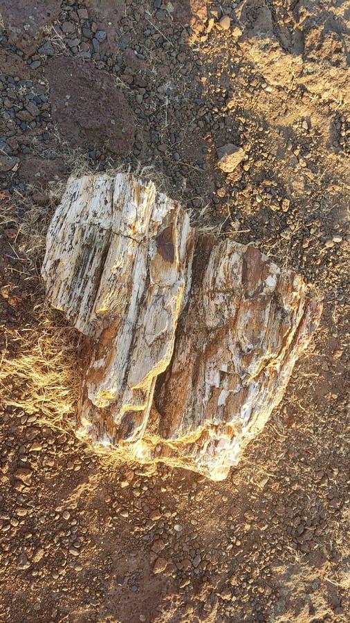 Madera fosilizada cerca de Wa ventajoso fotografía de archivo