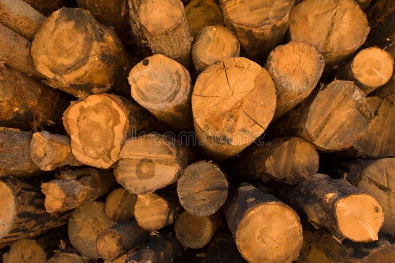Madera, madera de construcción y árboles imagen de archivo