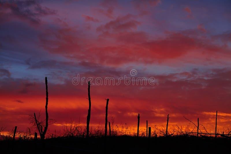 Madera muerta en un fondo de la puesta del sol imagen de archivo