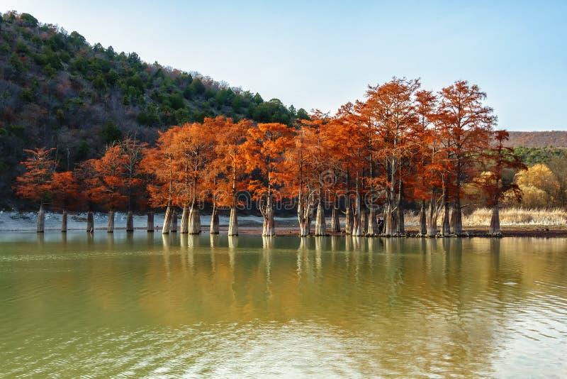 Madera roja hermosa del árbol de ciprés en el lago Sukko por Anapa, Rusia Paisaje escénico del otoño imagen de archivo