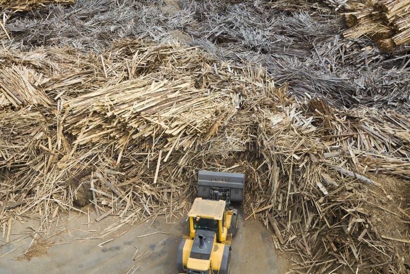 Madera y planta de la biomasa fotos de archivo