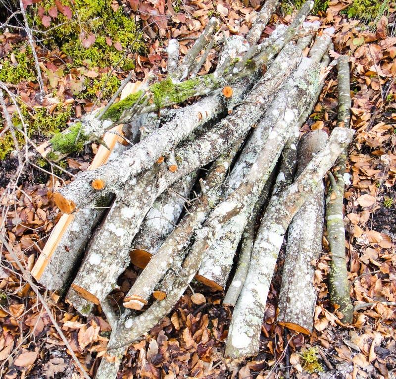 maderas Bosque bosnio foto de archivo