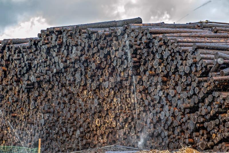 Maderas de la impregnación con la creosota para la preservación de madera imagen de archivo libre de regalías