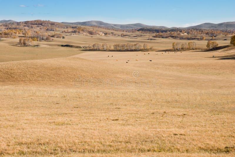 Maderas de oro en prado bajo el cielo azul foto de archivo