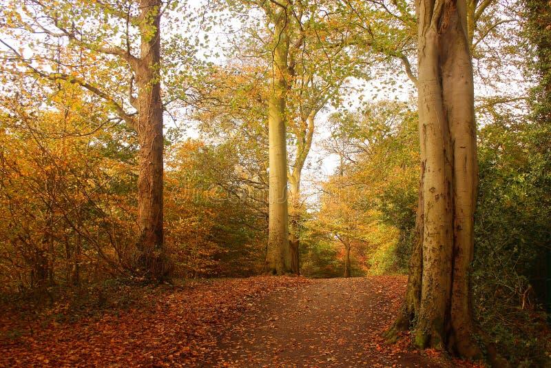 Maderas del otoño fotos de archivo