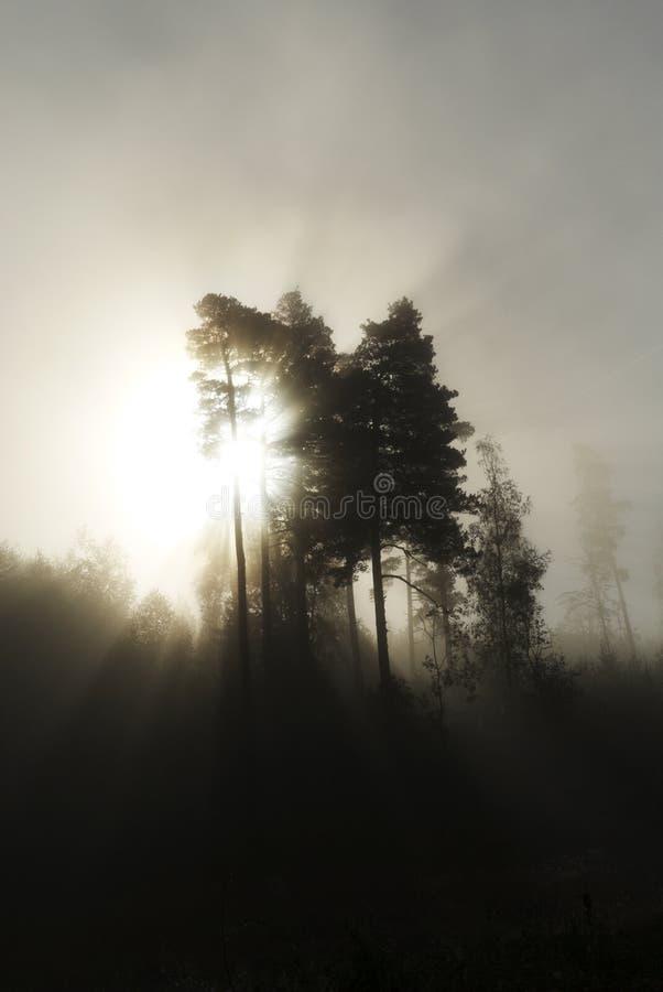 Maderas místicas fotografía de archivo libre de regalías