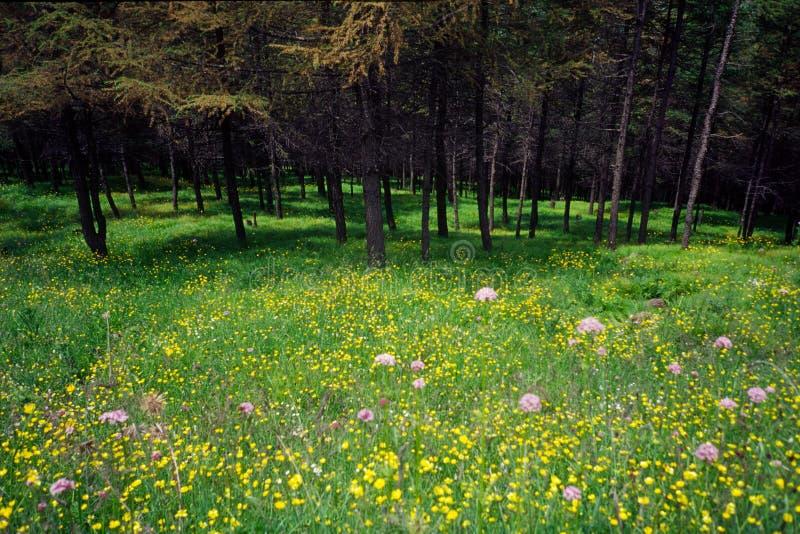 Maderas y flores fotografía de archivo libre de regalías