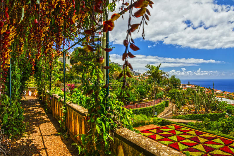 Madery wyspa, ogród botaniczny Monte, Funchal, Portugalia zdjęcia royalty free