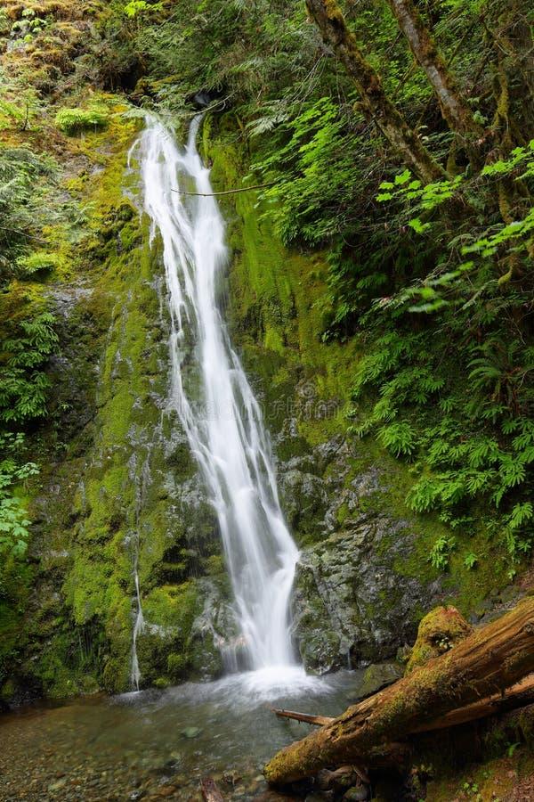 Madison falls, Olympic National Park. USA royalty free stock photography
