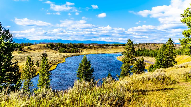 The Madison River as it flows through the western most part of Yellowstone National Park. Along Highway 191 in Wyoming, United States of America royalty free stock photography
