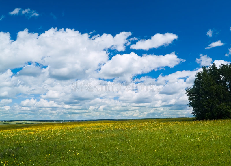 Madow and tree royalty free stock photography
