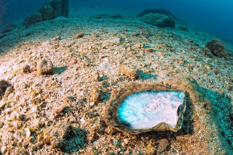 Madre de perlas en un paisaje subacuático colorido del filón imágenes de archivo libres de regalías