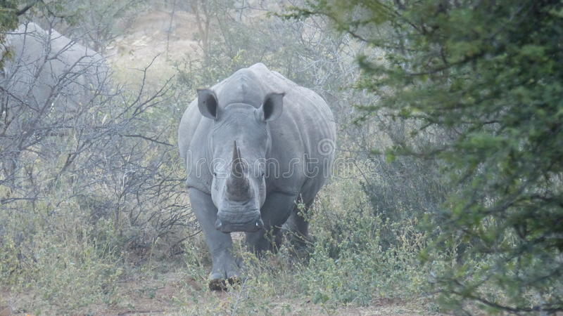 Madre del rinoceronte imagen de archivo libre de regalías