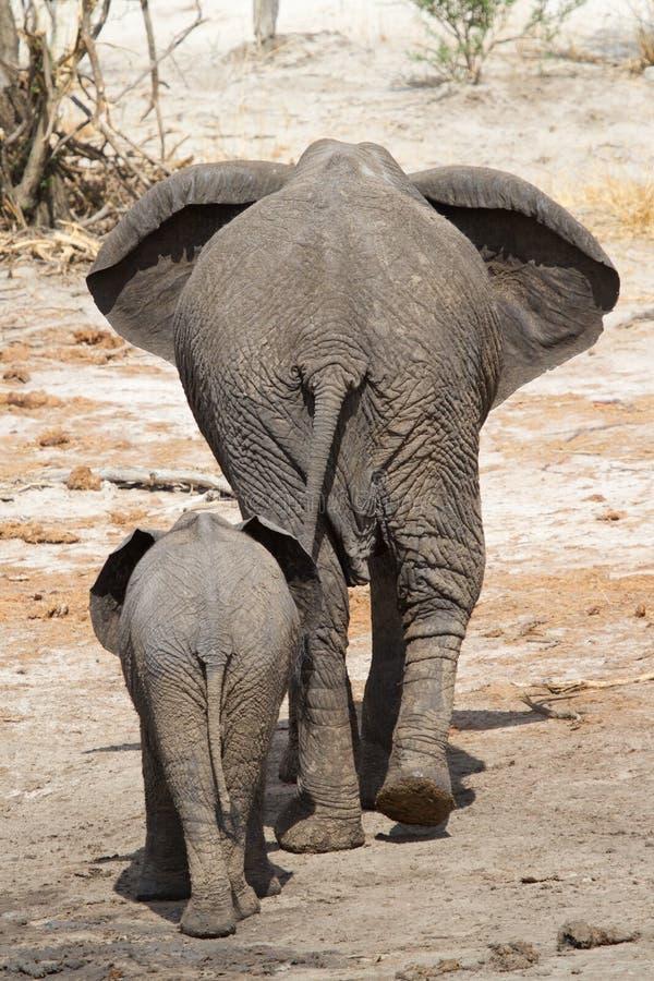 Madre dell'elefante fotografia stock
