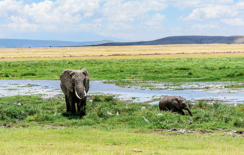 Madre dell'elefante con il vitello nel Kenya, Africa fotografia stock libera da diritti