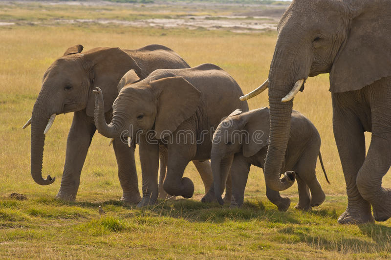 Madre dell'elefante ed i suoi tre bambini