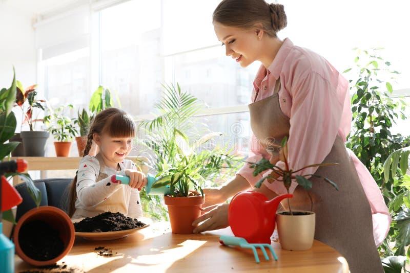 Madre e figlia che prendono cura delle piante domestiche alla tavola fotografia stock libera da diritti
