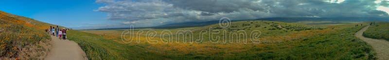 Madre e figlia di Latina che camminano nel campo del papavero di California del deserto su panorama del percorso immagini stock libere da diritti