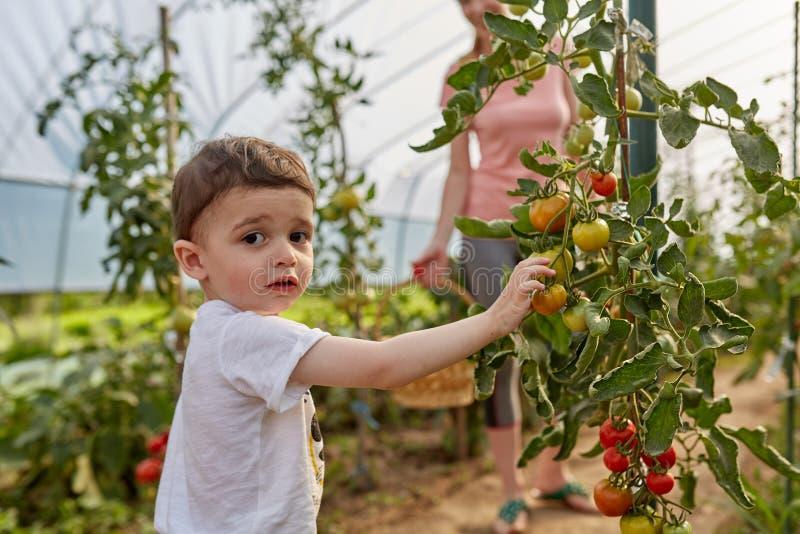 Madre e figlio nel bagno dei pomodori fotografia stock libera da diritti