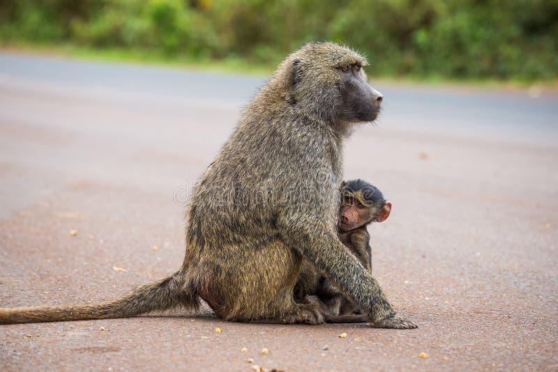 Madre verde oliva del babuino con su bebé en la calle imagenes de archivo