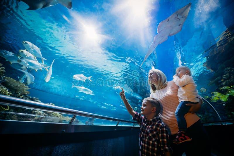 Madre y su vida marina de observación del niño imagenes de archivo