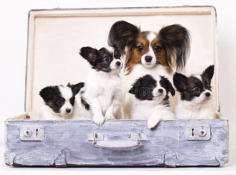 Madre y sus perritos foto de archivo libre de regalías